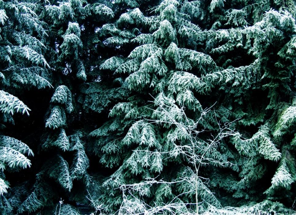 photoblog image spruce grove