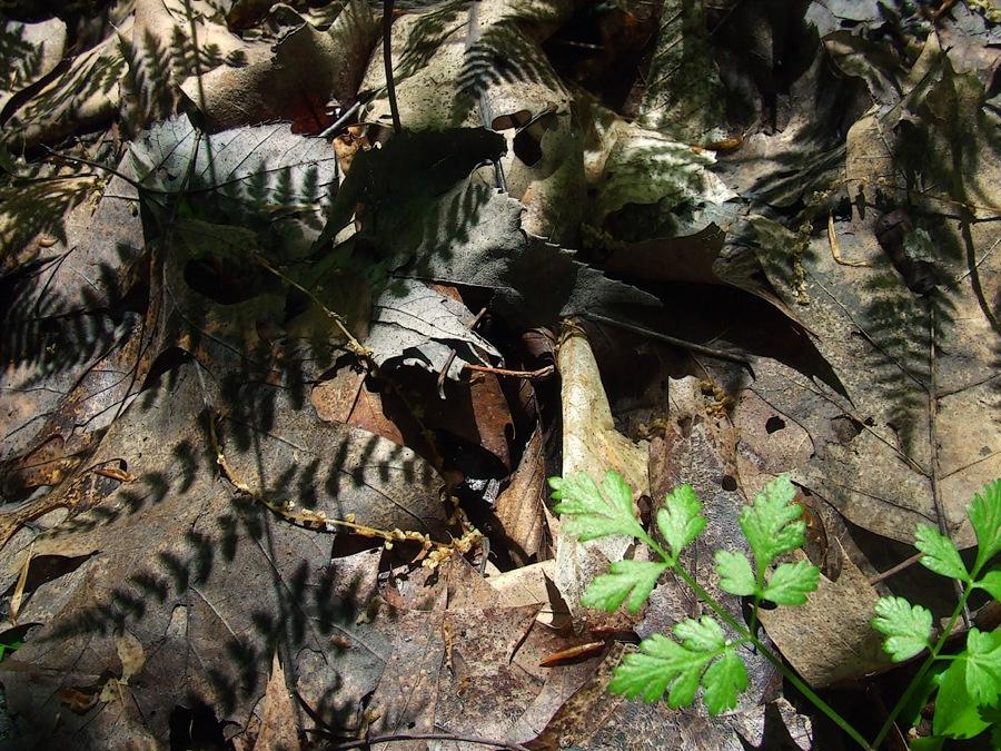 photoblog image fern shadows